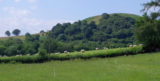 Meadows and hillside near Franksbridge