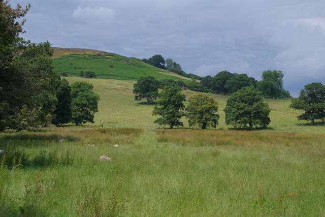 Meadow and rising hillside