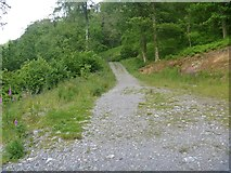 NY2924 : The ascent to Latrigg [7] by Michael Dibb