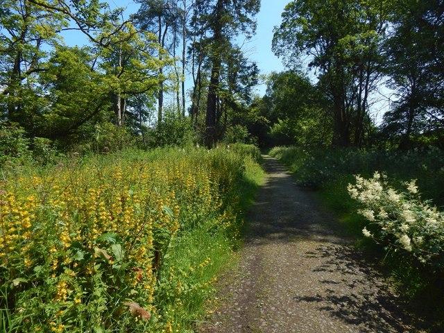 Path beside a golf course