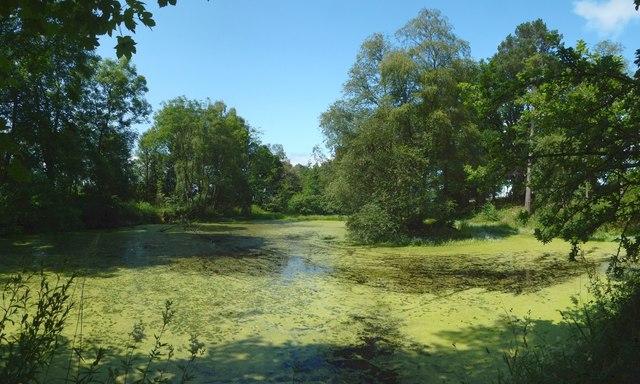 Pond in Kilmahew Estate