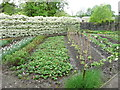 SN5822 : Vegetables in the Lower Walled Garden, Aberglasney by Humphrey Bolton