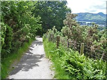 NY2724 : The descent from Latrigg [15] by Michael Dibb