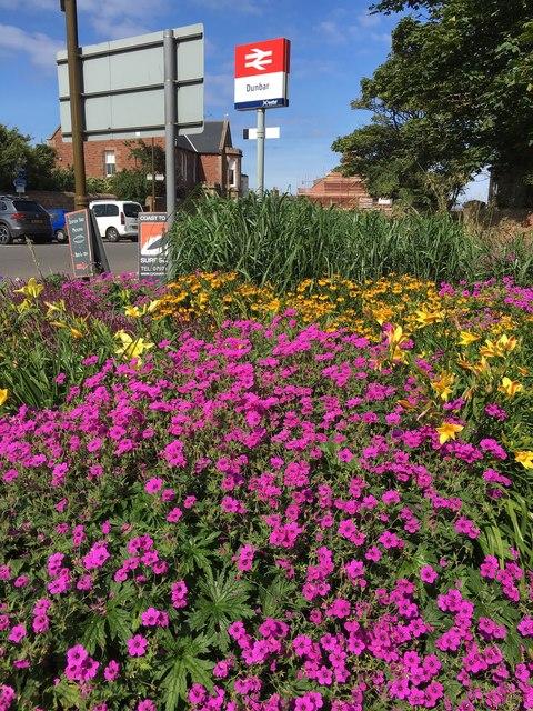 Colourful Flower Bed near Station Road Dunbar