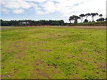 NT6378 : Seaweed on the Flats by Adam Ward
