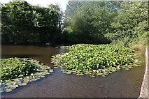 TL4340 : Pond by Heydon Lane by David Howard