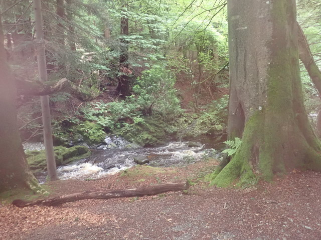 The Shimna River from the Riverside path