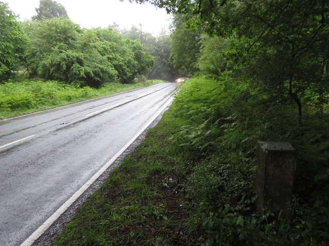 Speech House Road, Forest of Dean, and a milestone