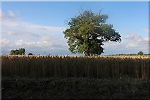 TL4238 : Field by Hall Lane, Great Chishill by David Howard
