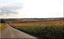TL4138 : Bogmoor Road, Great Chishill by David Howard