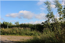 TL3934 : Path near Nuthampstead by David Howard