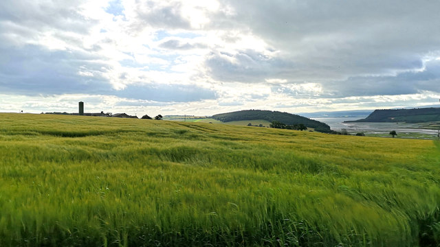 Summer barley field by Tullich Steading
