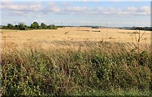 TL3932 : Fields by Lincoln Hill by David Howard
