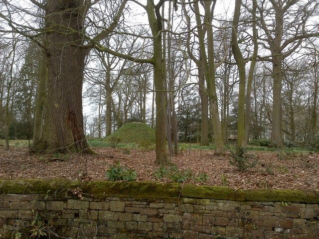 Woods at Castletown