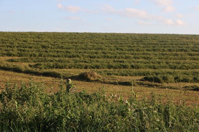Field by Albury Road, Clapgate