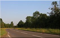 SP9486 : Sudborough Road, Brigstock by David Howard