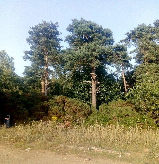 Woodland, Martlesham Heath