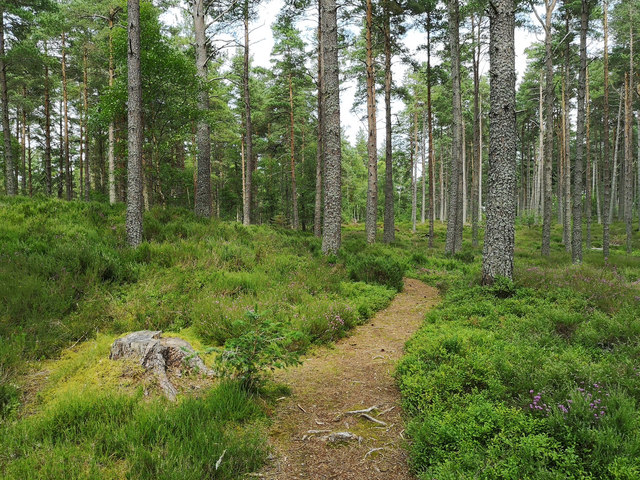 Path in Coulhill Wood