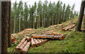 NZ0741 : Logs from tree felling in Backhouse Wood by Trevor Littlewood