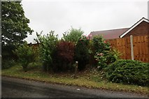 TM1159 : Garden on Stowmarket Road, Earl Stonham by David Howard