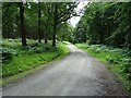 SO7474 : Forest road, Wyre Forest by Philip Halling