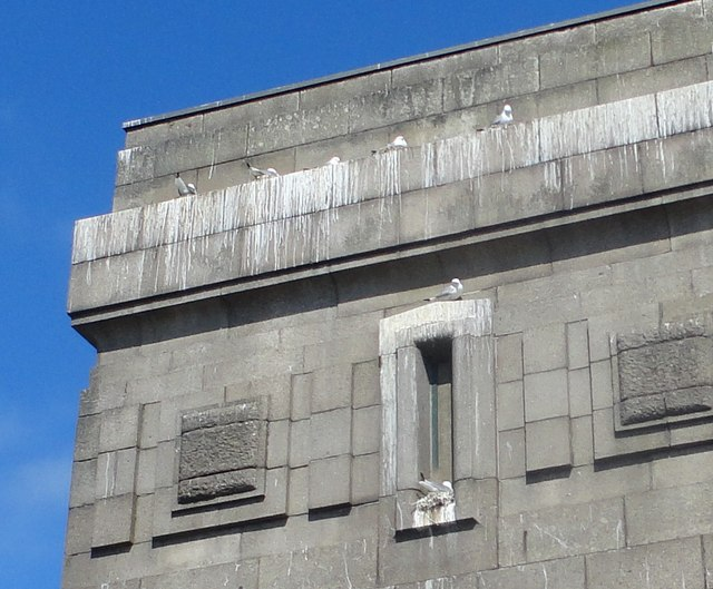 Kittiwakes on the Tyne Bridge