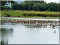 SO7204 : The South Lake at Slimbridge by David Dixon