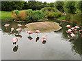 SO7204 : WWT Slimbridge, Andean Flamingos by David Dixon