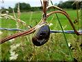 H3877 : Snail on a stalk, Glasmullagh by Kenneth  Allen