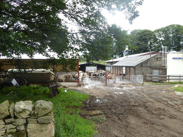 Farmyard with cattle at Wintertarn Farm