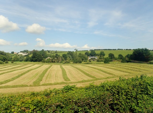 Silage crop west of the Crown Bridges
