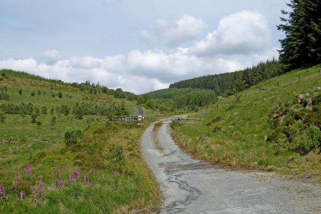 Forestry road in upper Cwm Tywi, Powys