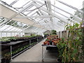 SN5722 : Such a tidy greenhouse! by Eirian Evans