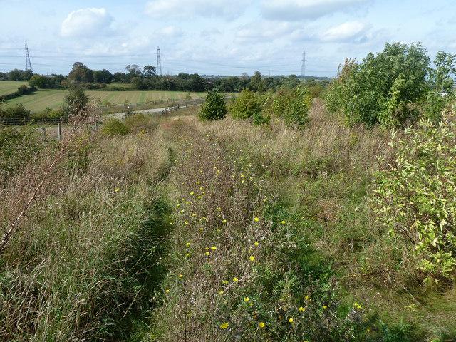 Overgrown railway access path
