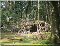 SH6504 : Tree House in the Woods by Des Blenkinsopp