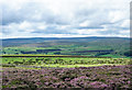 NZ0238 : Heather moorland south of Fatherley Hill by Trevor Littlewood