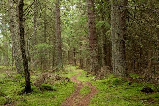 Path in Holy Wood, Black Isle