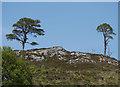 NH3539 : Scots Pine, Strathfarrar by Craig Wallace