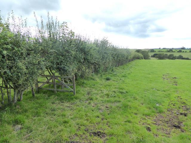 Hedgerow near Sideway Bank Farm