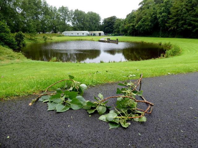 Fallen foliage, Omagh