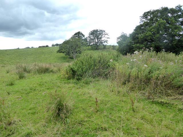 Field near Dryevers Farm