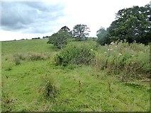 NY6417 : Field near Dryevers Farm by Oliver Dixon