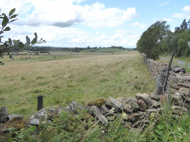 Field and wall beside the Long Rigg road