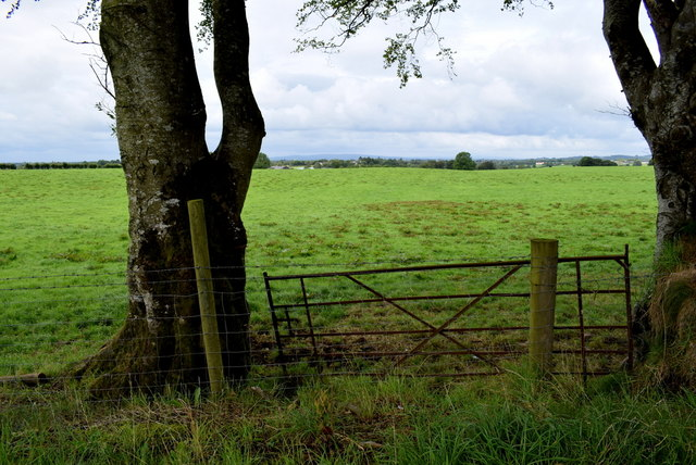 Rusty gate between trees, Bracky