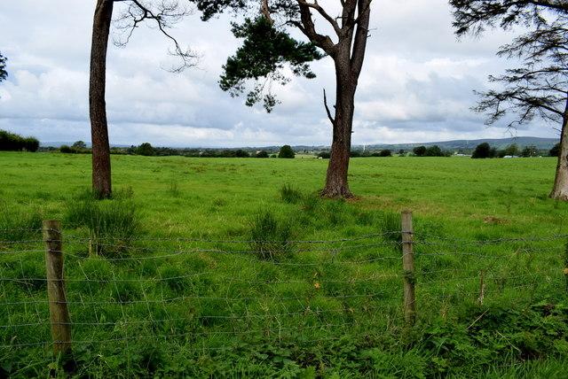 A large field, Bracky
