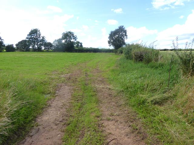 Field and farm track near Hawkrigg Farm