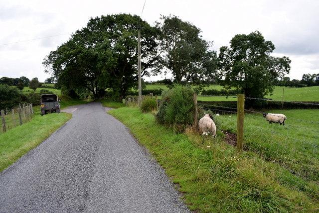 Sheep along the roadside on Stoneleigh Road