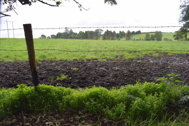 Muddy field, Bracky