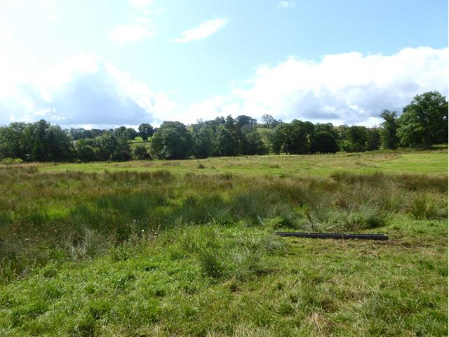 Marshy field above Scale Beck