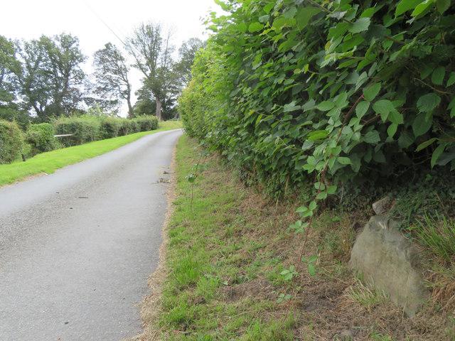 Tir-y-Fron Lane, a rock and a pivot bench mark